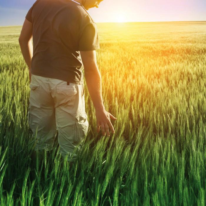 Homme dans le champs